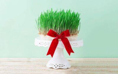 راهنمای کامل کاشت سبزه عید